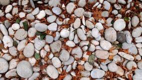 Otoczaka i liści tło Zdjęcia Stock