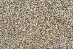 Otoczaka obmycia konowie z szorstką tekstury powierzchnią Zdjęcia Royalty Free