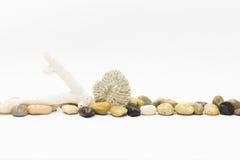 Otoczaki i dwa biel koral Obraz Royalty Free