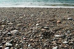 Otoczaki, kamienie, skały i gałęzatka na plaży, fotografia royalty free