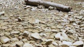 Otoczaki w strumieniu zdjęcie wideo