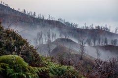 Otoczenia Ijen wulkan Drzewa przez mgły i siarki dymu Banyuwangi regencja Wschodni Jawa, Indonezja fotografia stock