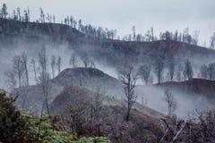 Otoczenia Ijen wulkan Drzewa przez mgły i siarki dymu Banyuwangi regencja Wschodni Jawa, Indonezja zdjęcia royalty free