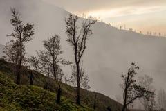 Otoczenia Ijen wulkan Drzewa przez mgły i siarki dymu Banyuwangi regencja Wschodni Jawa, Indonezja fotografia royalty free