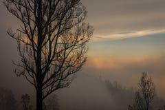 Otoczenia Ijen wulkan Drzewa przez mgły i siarki dymu Banyuwangi regencja Wschodni Jawa, Indonezja obrazy stock