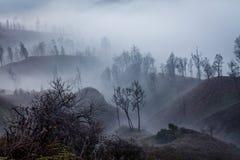 Otoczenia Ijen wulkan Drzewa przez mgły i siarki dymu Banyuwangi regencja Wschodni Jawa, Indonezja zdjęcia stock