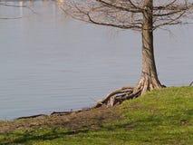 otokowy brzegu jeziora drzewo. zdjęcie stock