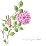 Otoman róż kwiatu różowe serie Royalty Ilustracja