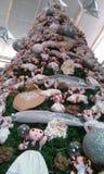 Otomi drzewo fotografia stock