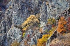 Otoño de oro del paisaje de la montaña Imagen de archivo libre de regalías