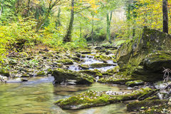 Otoño en el río Imagen de archivo