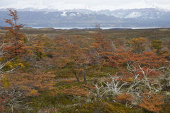 Otoño en la Patagonia, Chile Imagen de archivo libre de regalías