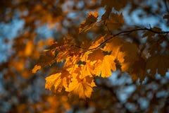 Otoño y hojas Foto de archivo