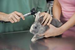 Otoscopio de Examining Rabbit With de la enfermera en la tabla Fotografía de archivo