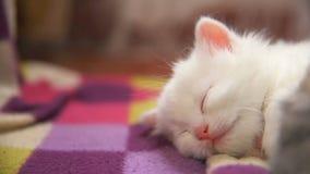 Otro sueño de mentira de la cara grande blanca del gatito encendido almacen de metraje de vídeo