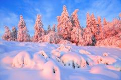 Otrolig plats med dolda skogar för snö arkivbilder