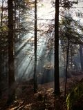 Otroliga magiska älvas skog royaltyfri fotografi