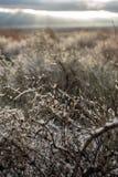 Ottaökensnö på ökenväxter fotografering för bildbyråer