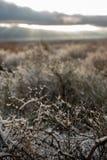 Ottaökensnö på ökenväxter arkivfoton