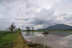 Otta av risfältfältet i Bukit Mertajam Royaltyfri Fotografi