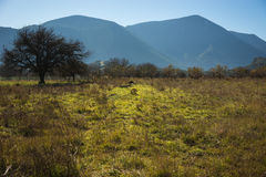 Otta i bergen, fältet och dimman Arkivfoton