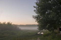 Otta i fältet med höstdimma och droppar av vatten i luften Toner av brunt Ingenting kunde se långt borta Beauti fotografering för bildbyråer