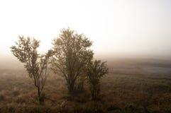 Otta i fältet med höstdimma och droppar av vatten i luften Toner av brunt Ingenting kunde se långt borta Beauti royaltyfri fotografi