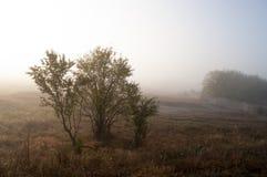 Otta i fältet med höstdimma och droppar av vatten i luften Toner av brunt Ingenting kunde se långt borta Beauti arkivbilder