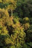 Otta i malaysisk djungel royaltyfri bild