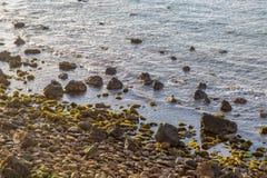 Otta på en Rocky Beach Arkivbilder