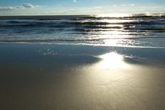 Otta på Hilton Head Island Arkivfoto