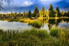 Otta på Jackson Hole Arkivfoton
