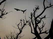 Otta spökat träd Arkivbild