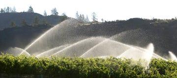 Ottabestänkande i en Okanagan vingård Royaltyfria Bilder