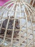 Ottamarknad i Luang Phabang Olaglig djurlivhandel i Laos royaltyfri foto