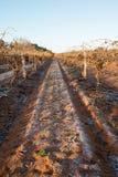 Ottasikt av den frostade vingården Royaltyfria Foton