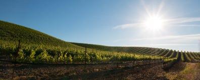 Ottasol som skiner på Paso Robles vingårdar i Centralet Valley av Kalifornien USA Royaltyfri Foto