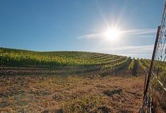 Ottasol som skiner på Paso Robles vingårdar i Centralet Valley av Kalifornien USA Arkivfoto
