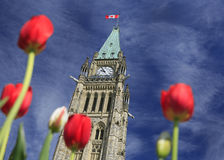 Ottawa Parliament tower surrounded by red tulips stock image