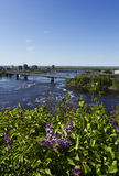 Ottawa River and lilac flowers Stock Images