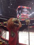 Ottawa Senators (Spartacat) Στοκ εικόνα με δικαίωμα ελεύθερης χρήσης