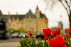 Ottawa summer tulip festival stock photography