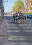 Ottawa Tulip Festival 2012 - Horse & Carriage Royalty Free Stock Image