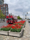 Ottawa Tulip Festival 2012 - Tour Bus. Tour bus and flowers at the 2012 Tulip Festival in Ottawa, Ontario,Canada Stock Images