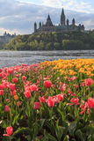 Ottawa Tulip Festival Fotografia Stock