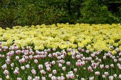Ottawa Tulip Festival Imagem de Stock Royalty Free