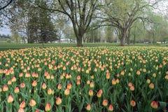 Ottawa 2016 Tulip Festival en el lago Dow Foto de archivo