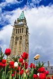 Ottawa Tulip Festival 2013 Royalty Free Stock Photography