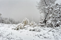 Ottenere un inverno freddo Fotografia Stock Libera da Diritti