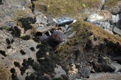 Otter Stockfoto